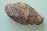 Fossilien aus einer Sammlung